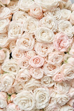 Floral carpet or Wallpaper. Background of mix of flowers. Beautiful flowers for catalog or online store. Floral shop and delivery concept. Top view. Copy space Standard-Bild - 150497042