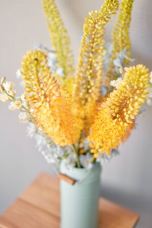 Eremurus flowering ornamental plant, beautiful yellow orange foxtail lily flowers in bloom, Desert Candle flower. Floristry concept. Spring colors Standard-Bild - 150497049