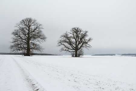 covered fields: Winter landscape. Fields covered with the first snow.