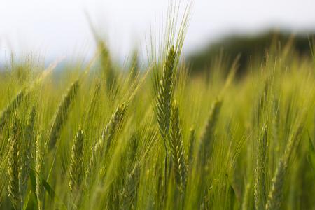 farm background: harvest