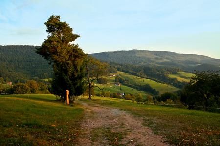 Schwarzwald Lizenzfreie Bilder - 44809330