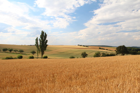 fall harvest: Rural landscape