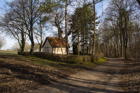 Rural landscape. Summer landscape with trees along the road.