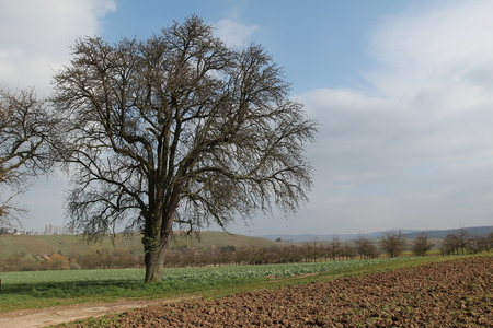 foreground: Landscape with a tree.Tree in the foreground. Stock Photo