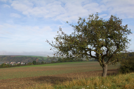 agrarian: Landscape with a tree.Tree in the foreground. Stock Photo