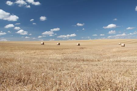 remove: Remove wheatfield