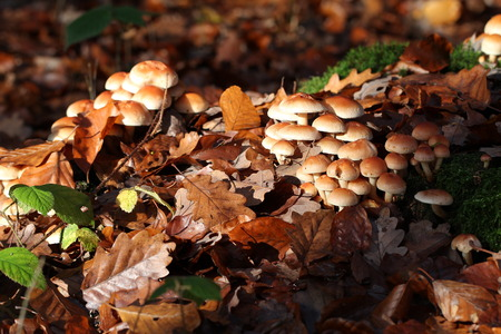 wild mushrooms: Wild Mushrooms
