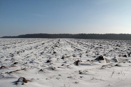 arando: arado de invierno