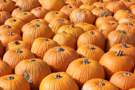 organic background: Pumpkins. Multicolored decorative pumpkins on autumn festival. Stock Photo