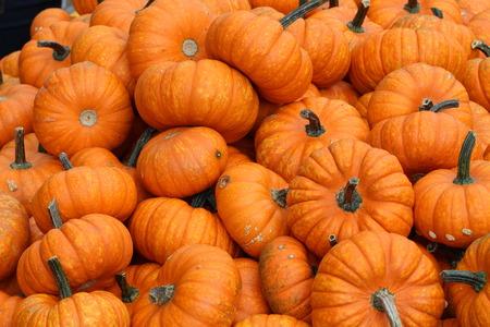 pumpkin patch: Pumpkins. Multicolored decorative pumpkins on autumn festival. Stock Photo