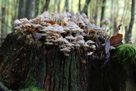 fungi woodland: Forest mushrooms