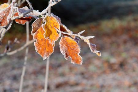 Blätter im Frost