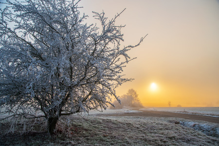 Winter Landscape  Sunrise  Frosty Morning Stock Photo