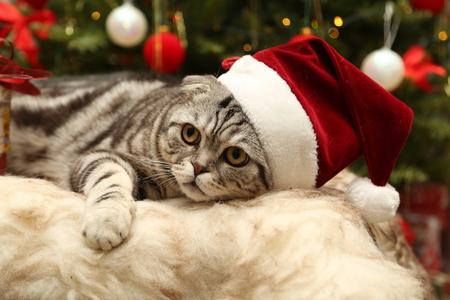 Cat in a suit of Santa Claus