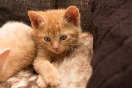 Pets  Kittens  Little kittens play Stock Photo