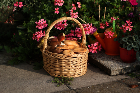 Mushrooms  Basket with edible mushrooms. Lizenzfreie Bilder