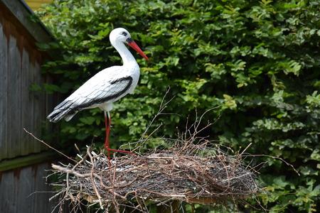 Decorative storks - garden decoration Standard-Bild - 111060528