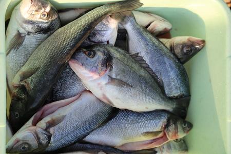 Fish processing  Fish processing outdoors. Detail. Standard-Bild - 110625734