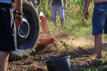 Agriculture / Potato harvesting in the farm Standard-Bild - 111689842