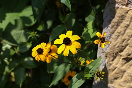 In the garden  flowers  beautiful yellow garden flowers Standard-Bild - 110721568