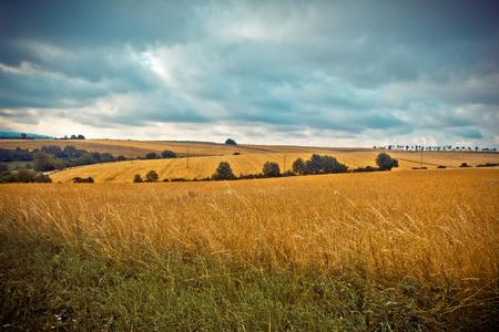 Ländliche Landschaft Felder mit reifem Weizen