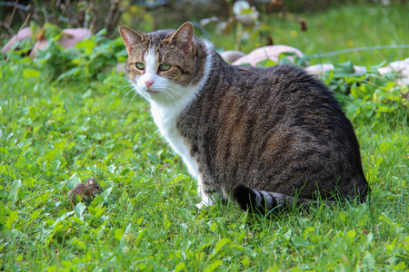 Cat  Domestic cat posing for the camera Standard-Bild - 110943529