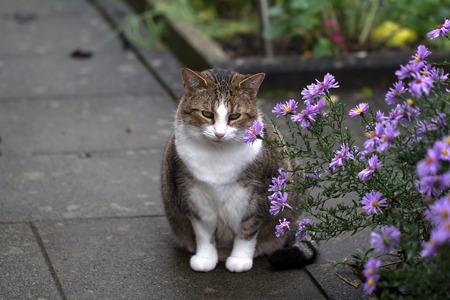 Cat  Domestic cat posing for the camera Standard-Bild - 110943538