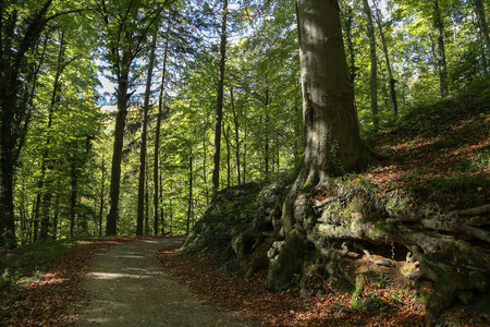 Beautiful forest landscape  road in the forest Standard-Bild - 110943527