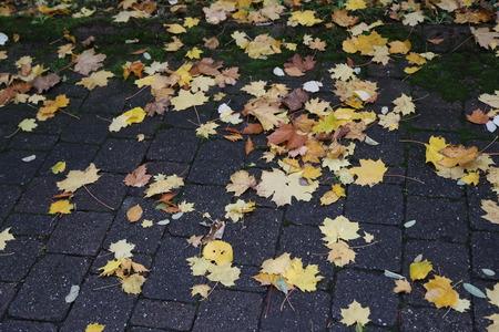 Autumn  Autumn Leaves on the asphalt Standard-Bild - 110763768