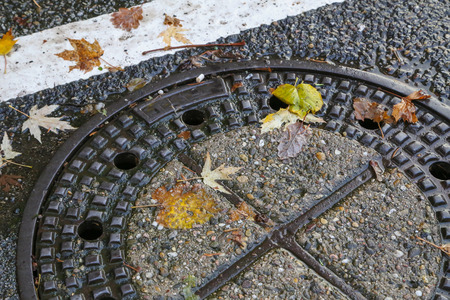 Autumn  Autumn Leaves on the asphalt Standard-Bild - 110763792