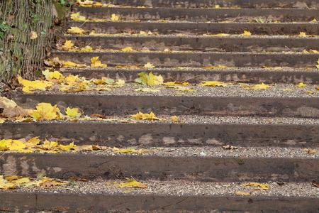 Herbstblätter liegen auf dem Asphalt Standard-Bild - 92993603