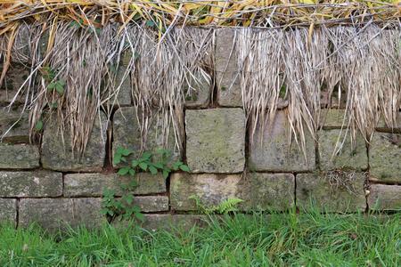 Hintergrund einer zerbröckelnden Wand bedeckt im Moos und in den Unkräutern Standard-Bild - 92928885