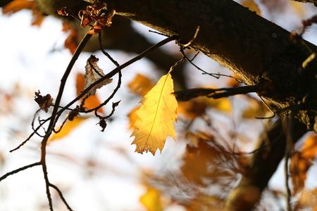 Herbst Standard-Bild - 92928887