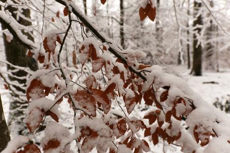 Winter im Wald Standard-Bild - 92725666