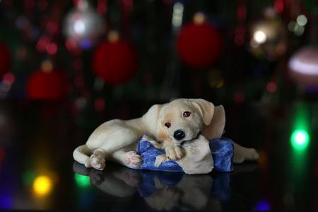 Weihnachten / schöne Weihnachten und neue Sommerszene Standard-Bild - 93694684