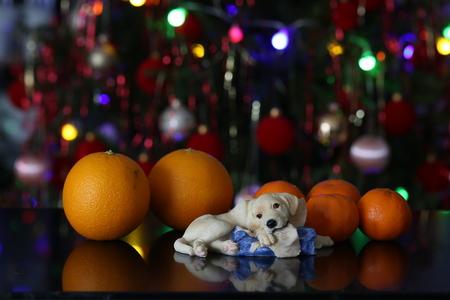 Christmas / Beautiful Christmas and New Years scene Standard-Bild - 93702248