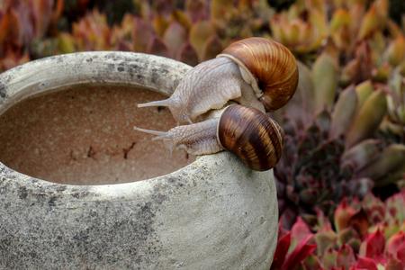 Fauna / Curious snails Standard-Bild - 115687218