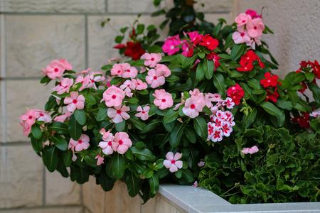 Beautiful balcony flowers