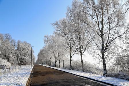 Winter Landscape / Birch Alley frosty morning