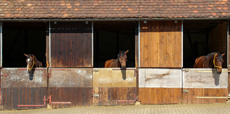 Three horses look out of the stables Stock Photo
