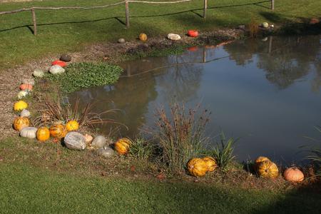 Pumpkins / Multicolored decorative pumpkin on autumn festival