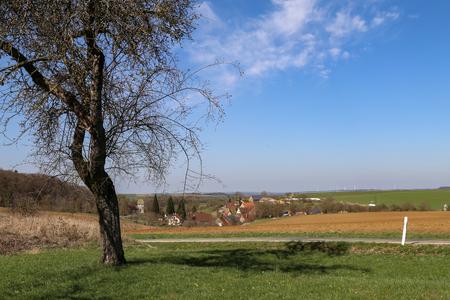 Spring landscape. Spring landscape with a tree.
