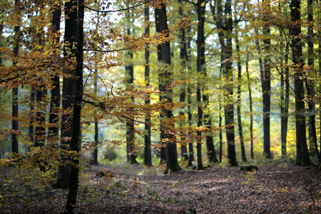 In the autumn forest. Autumn trees in the forest Standard-Bild - 114621016
