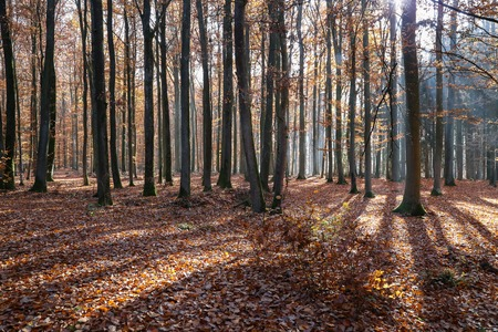 In the autumn forest. Autumn trees in the forest Standard-Bild - 114621069