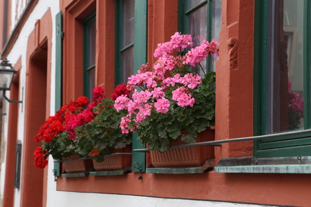 Beautiful balcony flowers. Beautiful balcony flowers on Windows Home Standard-Bild - 114621197