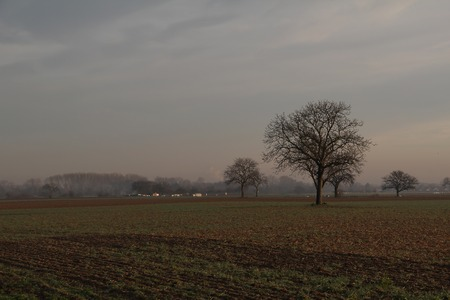 Morning landscape with fields and trees in fog. Standard-Bild - 114622585