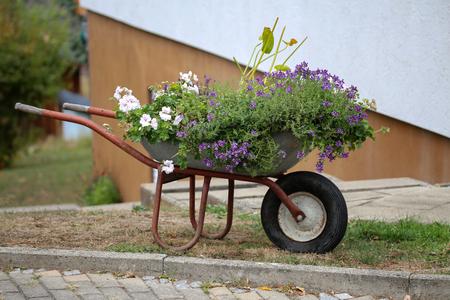 Construction wheelbarrow planted beautiful flowers stands in the garden Standard-Bild - 114623157