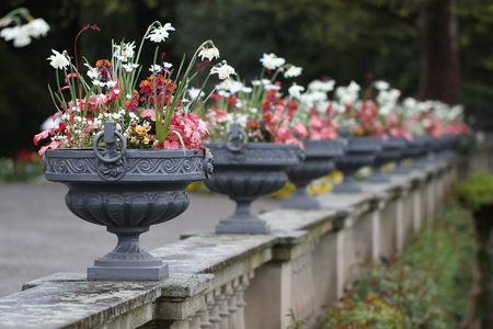 A number of metal vases with beautiful flowers Imagens