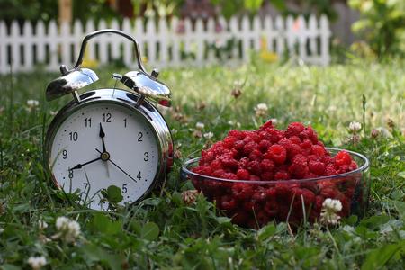 Berry season. Fresh raspberries and alarm in the grass