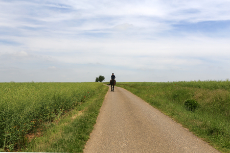 A rider is riding along a country road